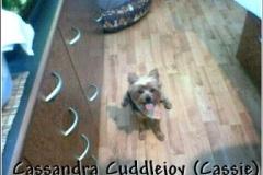 cassie_puppycut