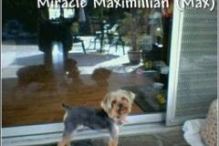 max_puppycut